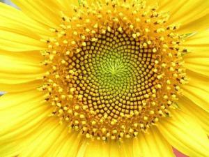 simetria_en_la_naturaleza (4)
